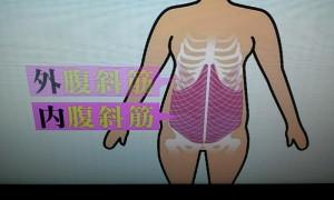 腹斜筋のさらに内側に腹横筋があります。