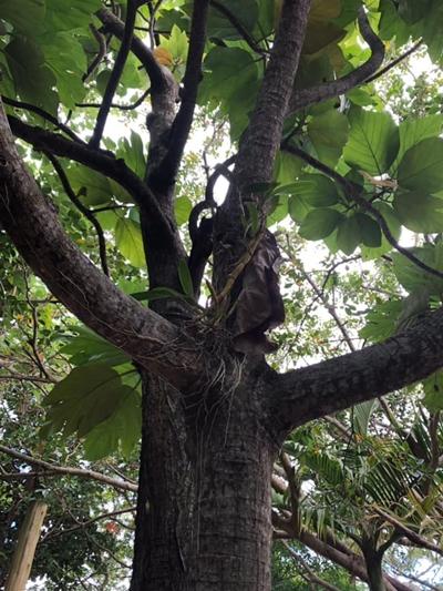 私は大きな木が大好き💕 このパンの木も手を広げています。 ピタッとひっついて抱きしめられました💓